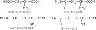 asam amino mengandung rantai samping yang mengandung gugus asam atau amida