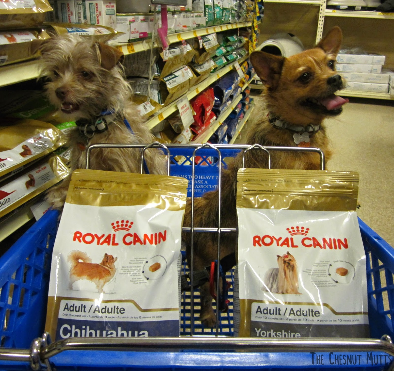Bailey and Jada with Chihuahua and Yorkie Royal Canin Dog Food at Petsmart