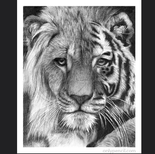 20-Tiger-Lion-Hybrid-Lisandro-Peña-Animal-Drawings-with-Attention-to-Minute-Details-www-designstack-co