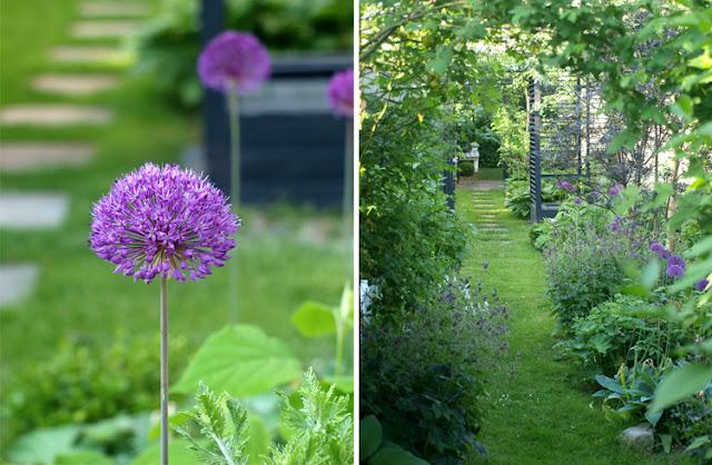Min have med allium og frodige haverum