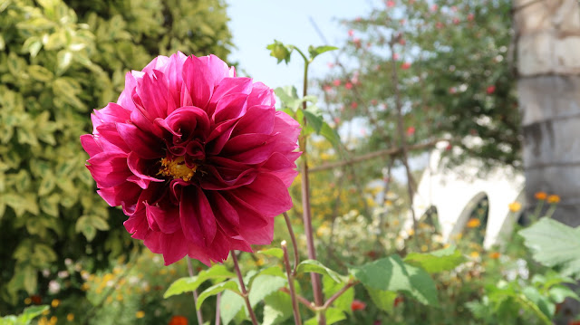 rose-flower-wallpaper-hd