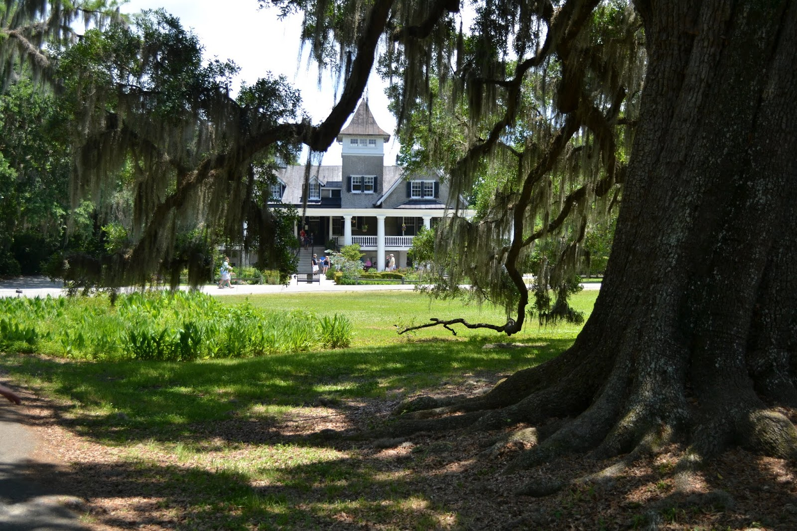 Плантация Магнолия, Чарльстон, Южная Каролина (Magnolia Plantation and Gardens, Charleston, SC)