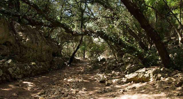 Camino Cala Rafalet