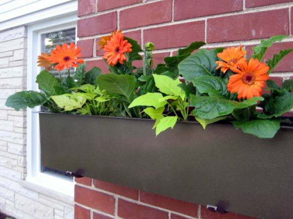 We planted some simple orange daisies in our new planter box