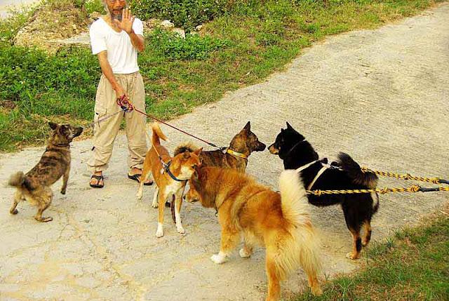 5 dogs, man