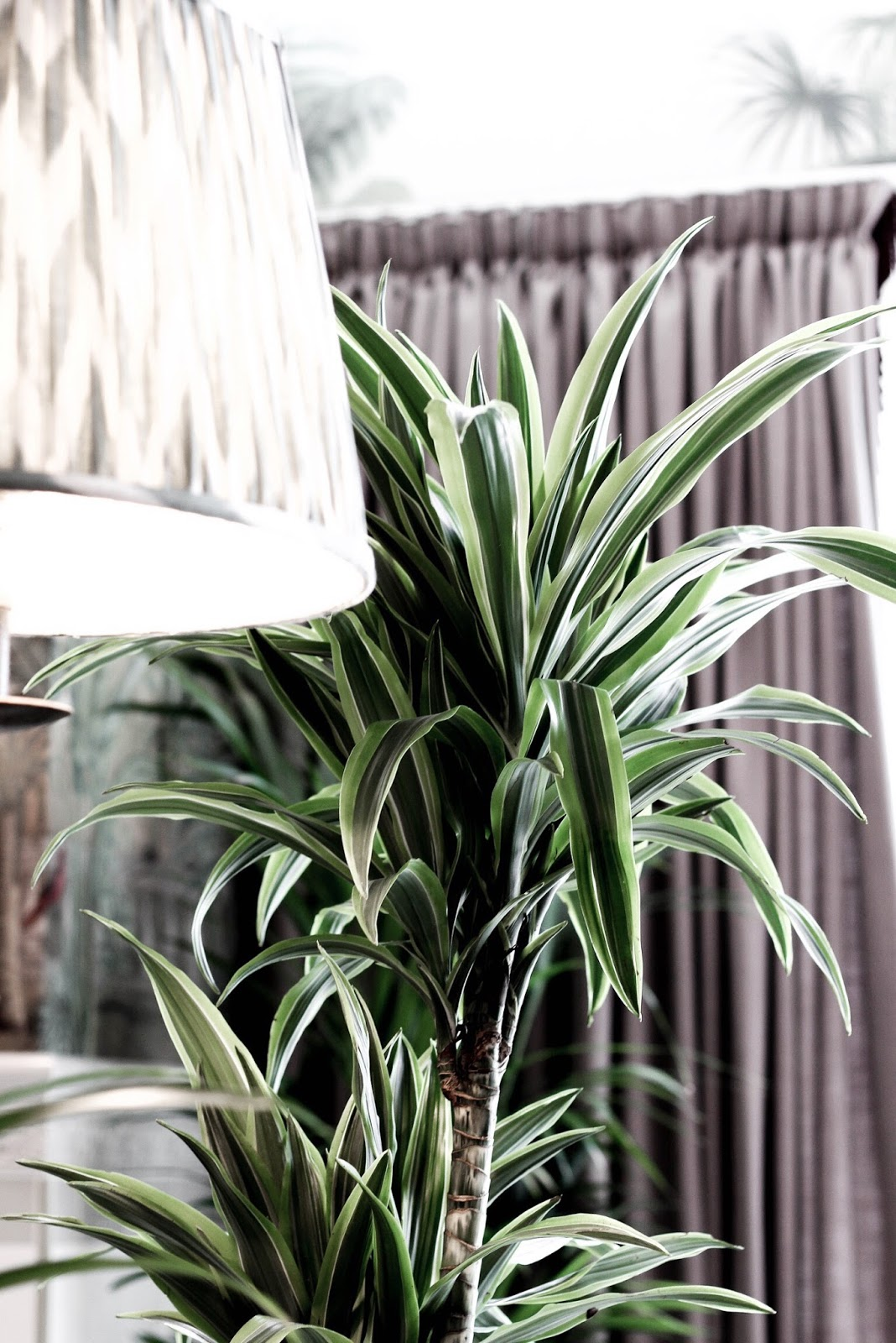 The Tamburlaine Cambridge Indoor Plants
