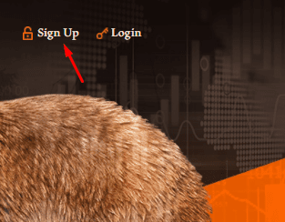 Регистрация в Grizzly Forex