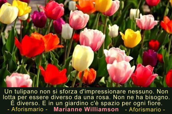Aforismario Tulipani  Aforismi frasi e citazioni