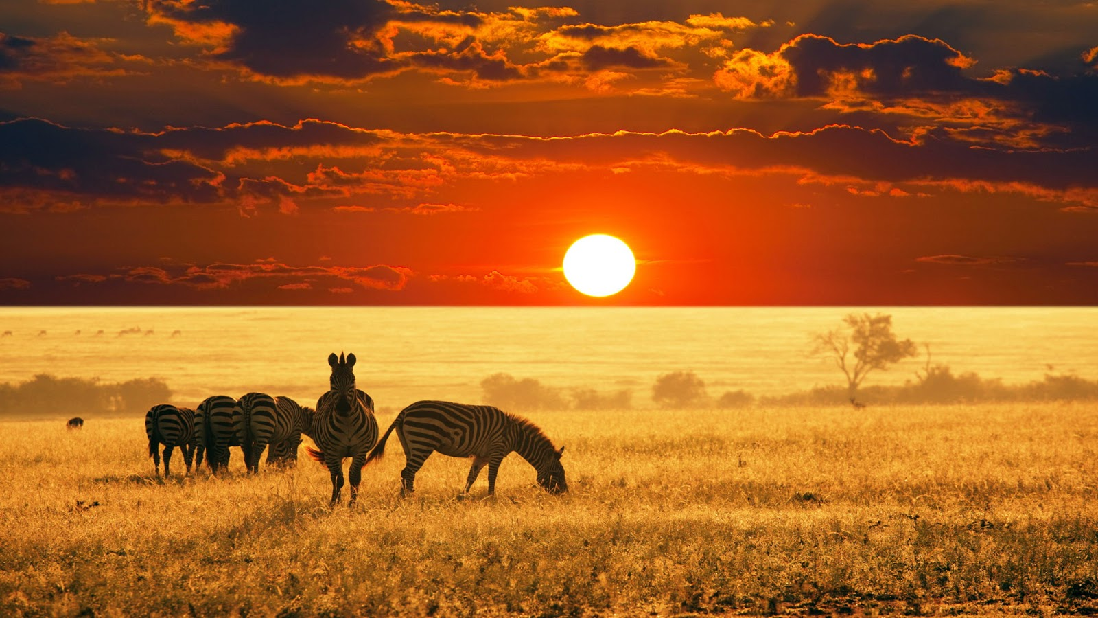 National Geographic Wallpapers