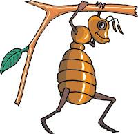 Manfaat Dan Efek Samping Semut Jepang