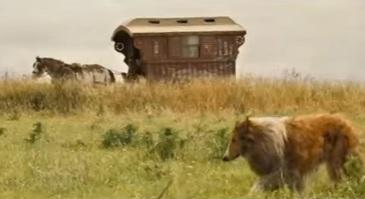 Lassie film 2005
