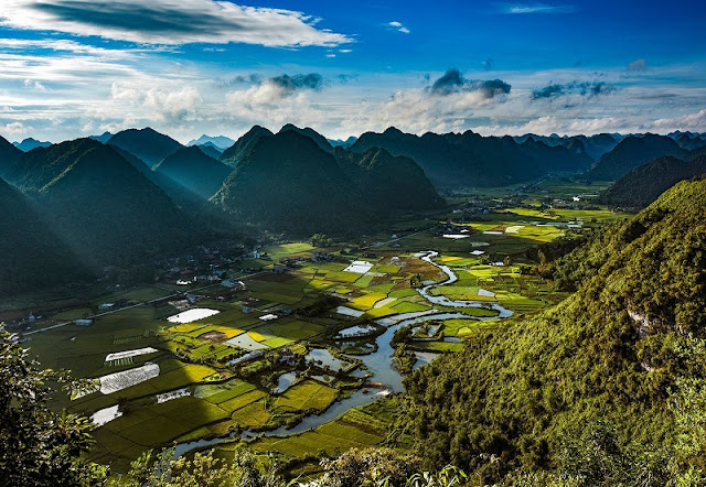 Immerse yourself in the golden color of ripe rice in the Bac Son valley