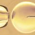 GENESIS DAY SURGERY </br><small>Centro Specializzato in Medicina della Riproduzione</small>