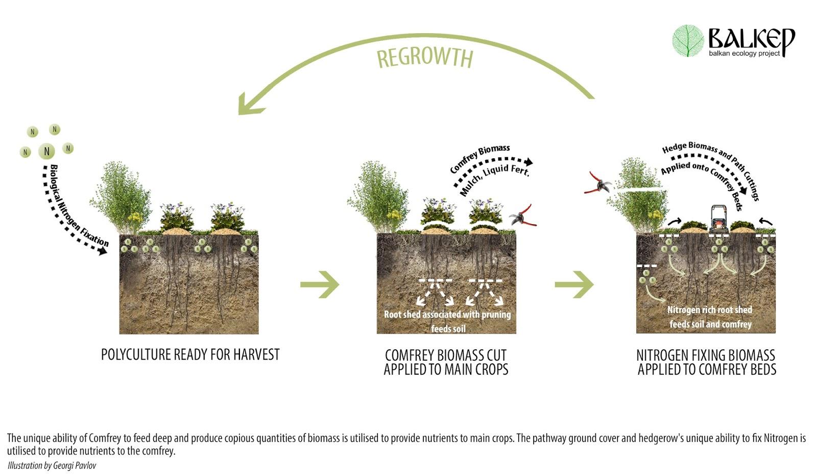 Balkan Ecology Project : Perennial Polycultures - The Biomass Belt ...