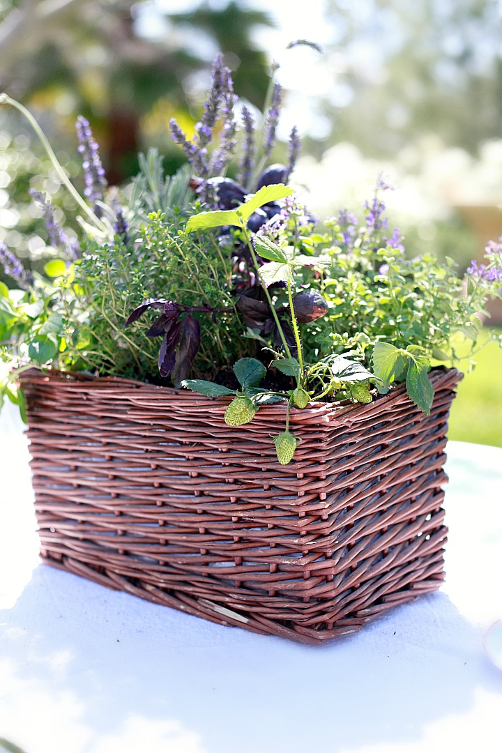 Beautiful DIY kitchen herb garden centerpiece.