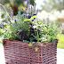 DIY Kitchen Herb Garden + Giveaway