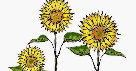 Ilmu Pengetahuan 1 Mewarnai Bunga Matahari Dengan Pensil Warna