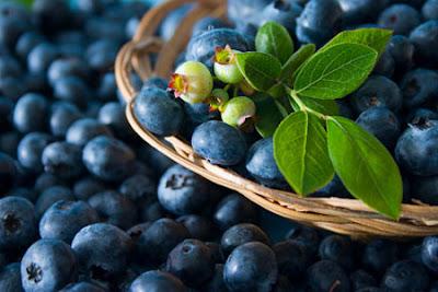 Cách trị tàn nhang bằng trái cây việt quất