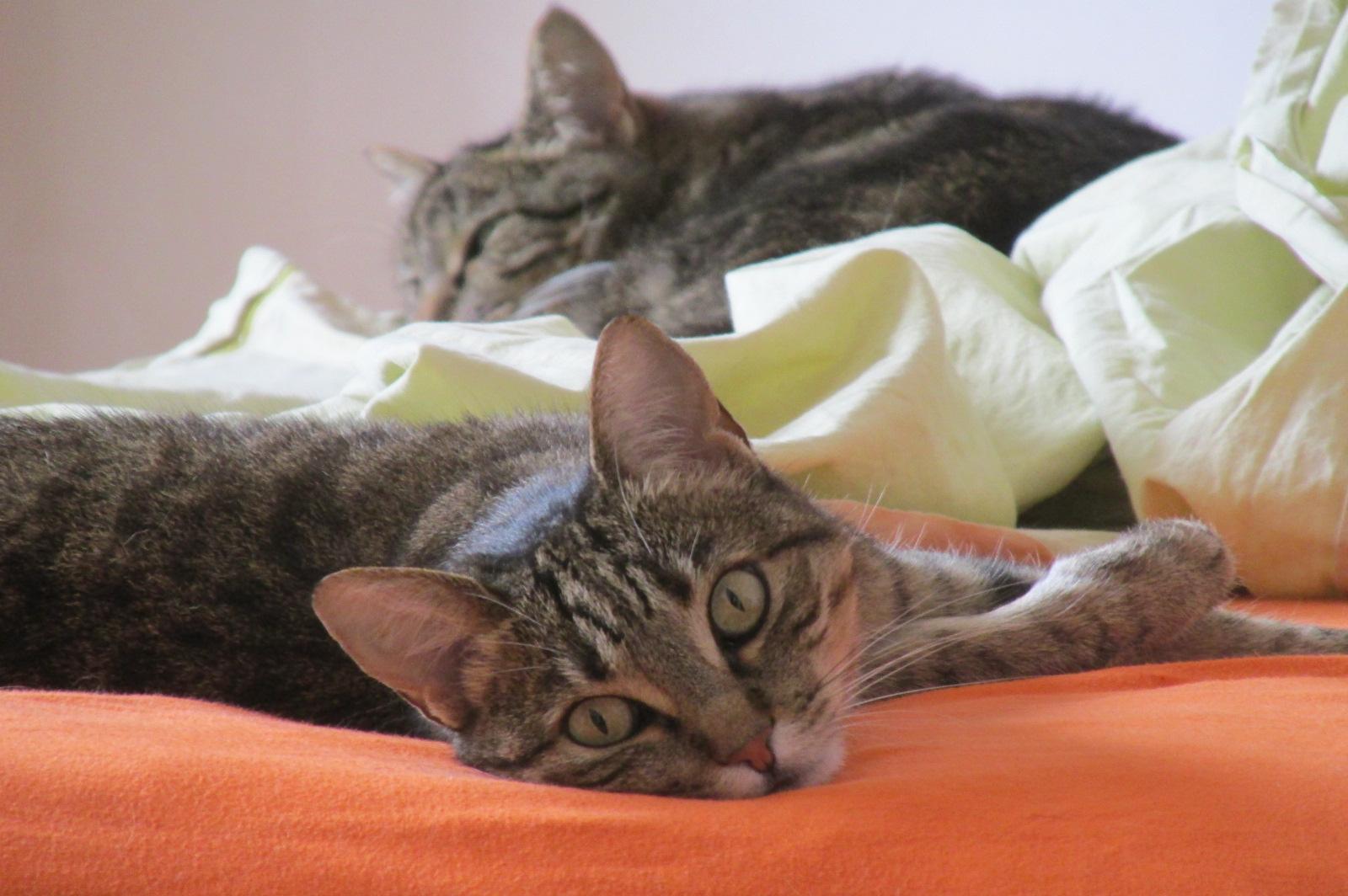 gatti-lenzuola