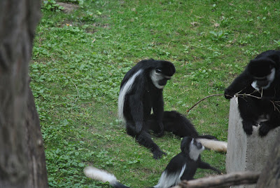 zoo Nyiregyhaza
