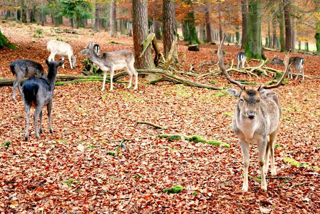 Wild, Herbst