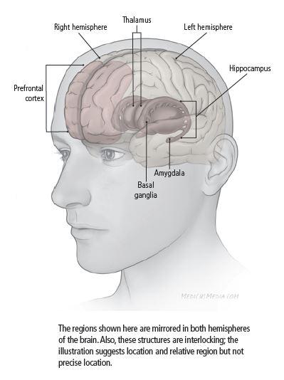 áreas do cérebro afetadas pela depressão