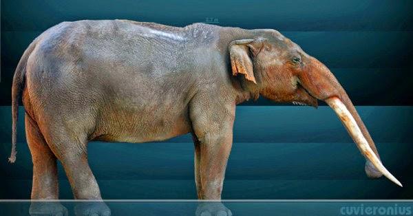 Gomphothere Cuvieronius Sp, gajah purba
