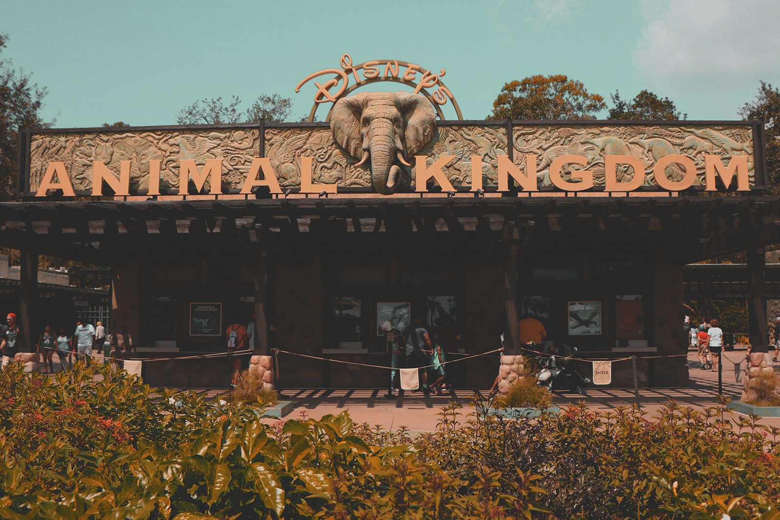 entrada parque animal kingdom