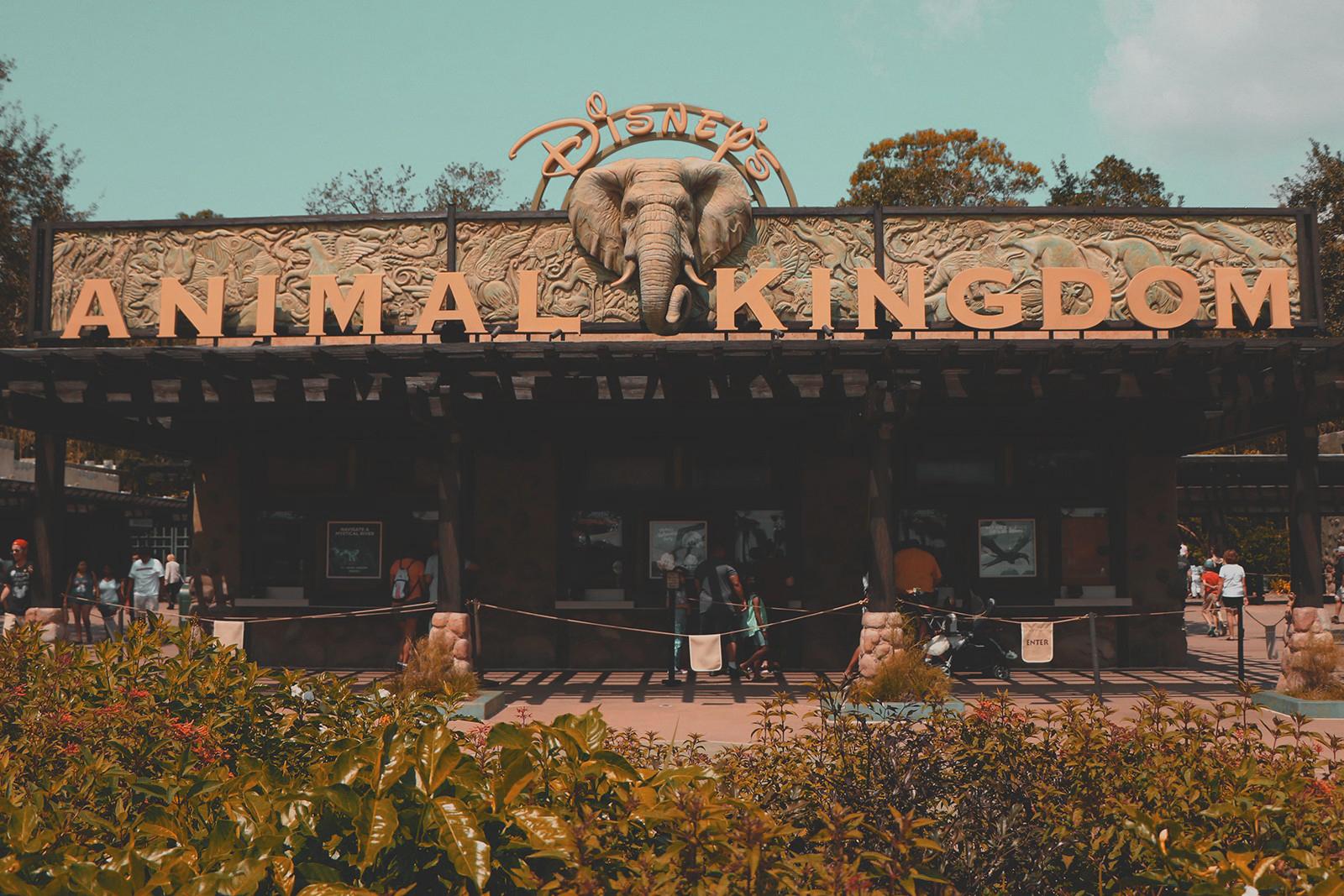 entrada parque animal kingdom