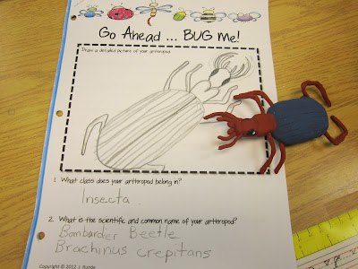 photo of Clay Arthropod and Research Activity @ Runde's Room