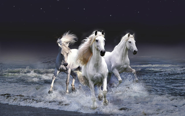 White Horse Photos And White Horse Pictures | White Horse Images And White Horse Wallpspers