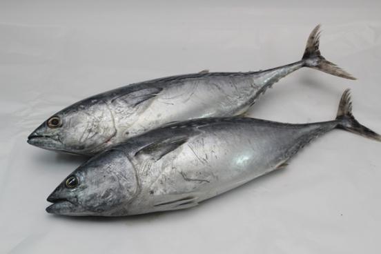 Bikin Ngakak!! Bocah Ini Salah Sebut Nama Ikan Tongkol Menjadi Ikan ADIK OTONG