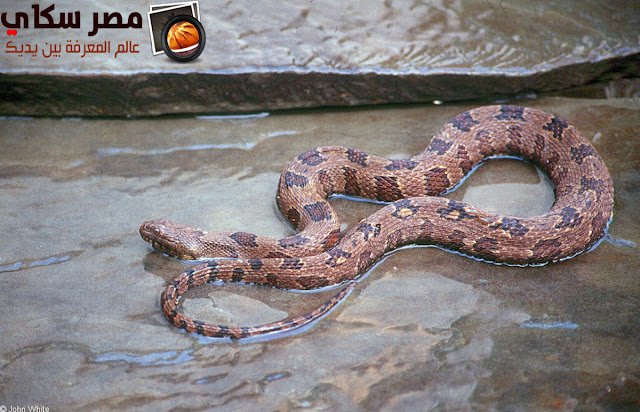 أشهر ثعابين الشجر والماء water-tree snake