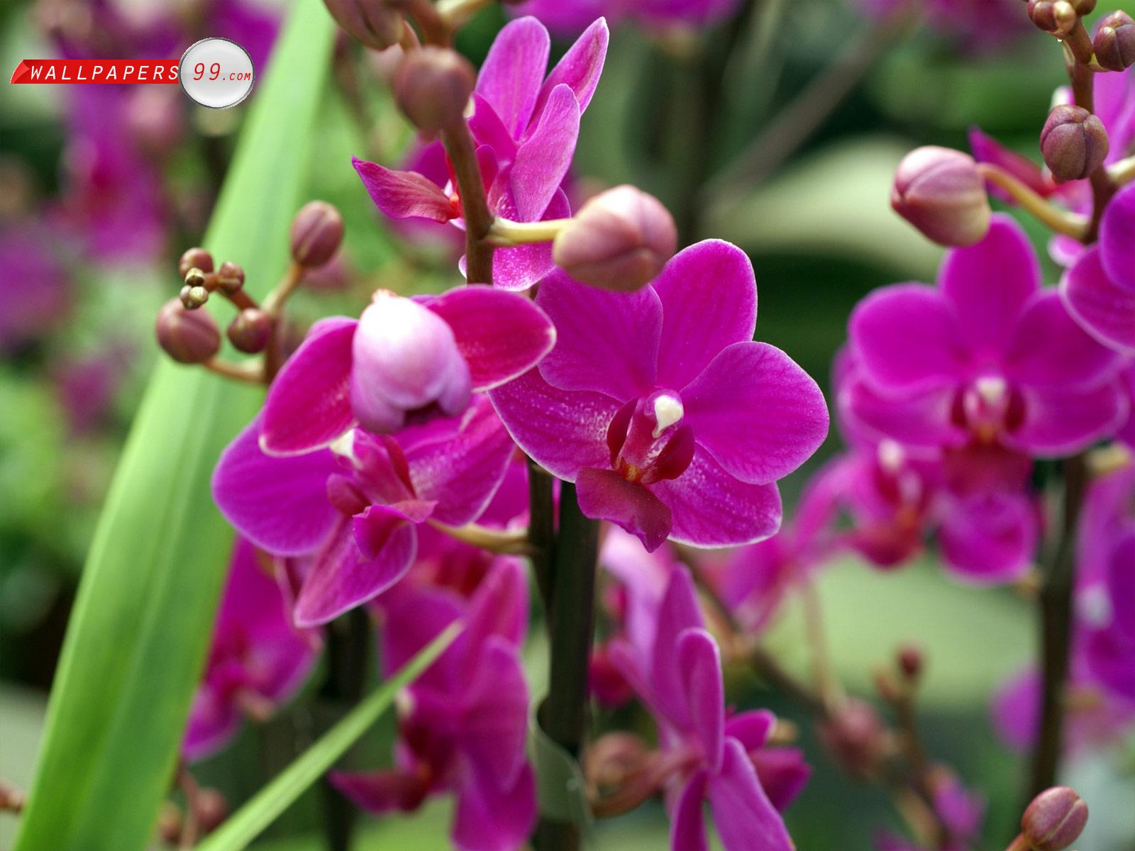 Types Of Orchid Flower Life Is Beautiful