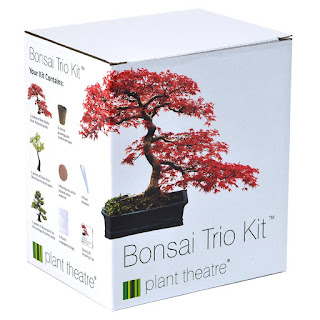 suitable for summer, Plant Theatre Bonsai Trio Kit – £12.49 amazon