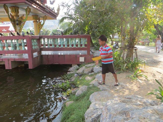 тайские мальчик кормит голубей