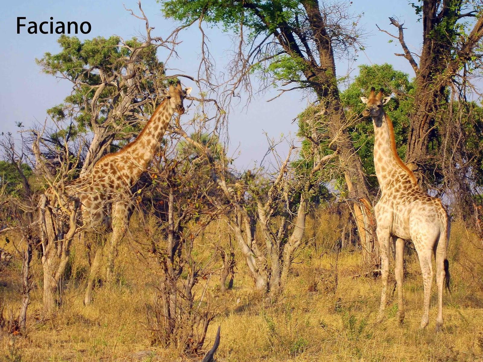 波札那 奧卡萬戈 Botswana Okavango Delta-Mma Dinare