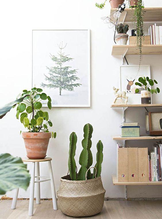 Cestas con plantas