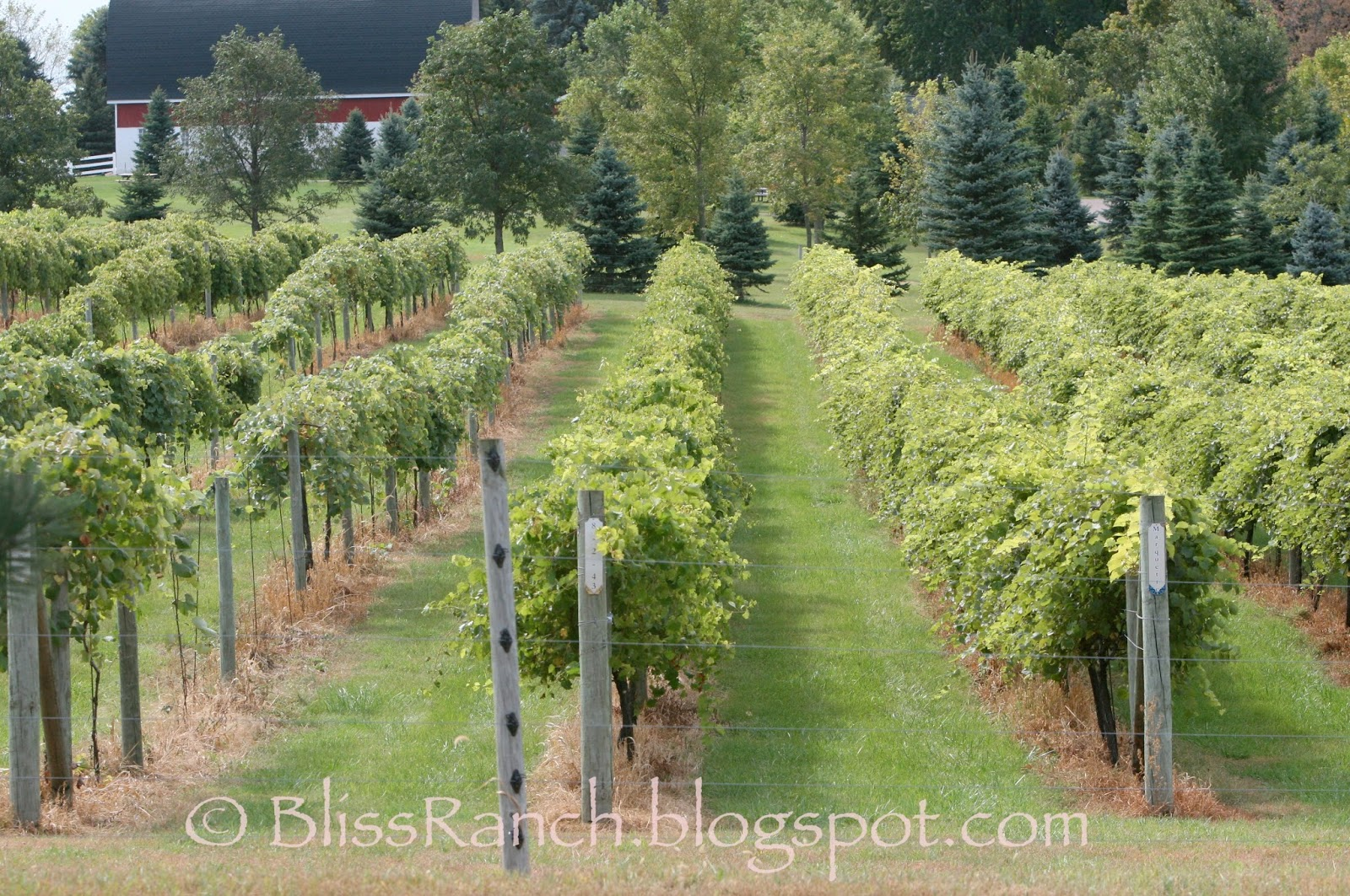 Winery Minnesota Bliss-Ranch.com