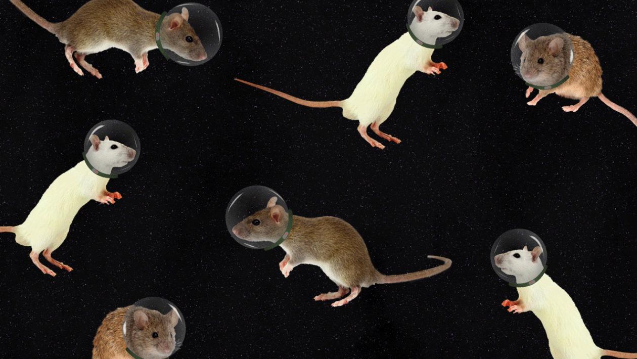 Estamos um passo mais perto de reproduzir animais (e humanos) no espaço