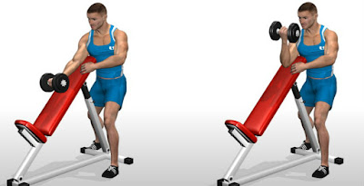 static dumbbell curl biceps workout