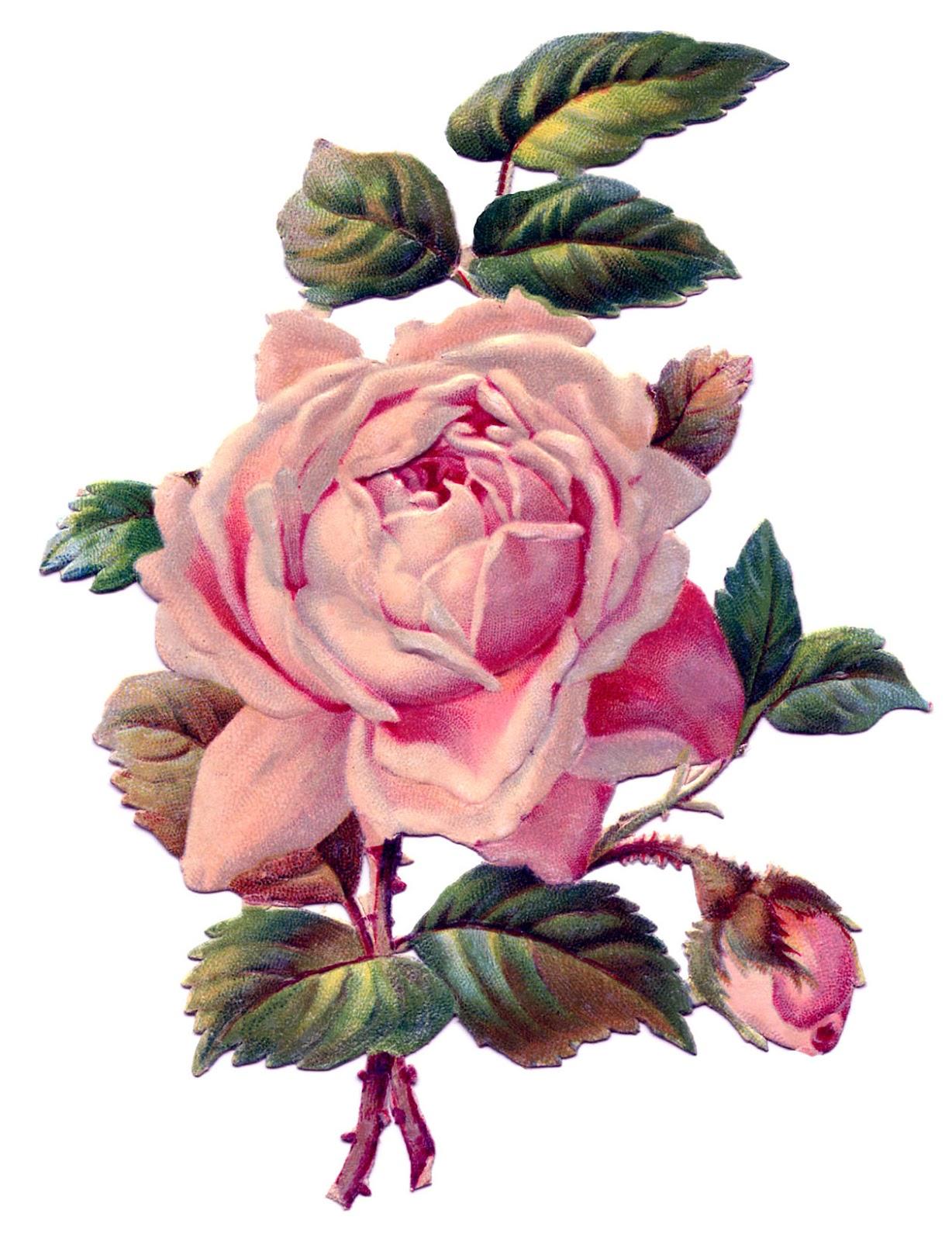http://4.bp.blogspot.com/-1W2ewVHDSq8/T6B5hHt3r0I/AAAAAAAARkw/B7j4I_kAPe8/s1600/pink-rosevintageimage-Graphics-Fairy2.jpg