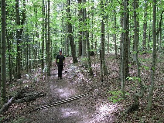 Przez bukowy las.