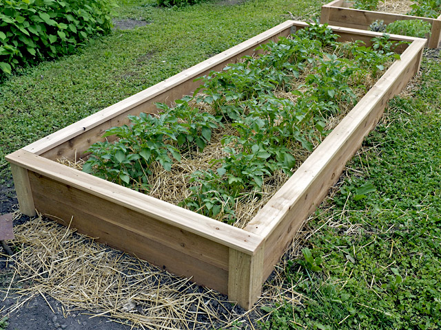 Western Red Cedar Raised Garden Bed by Artist and Builder Minnesota