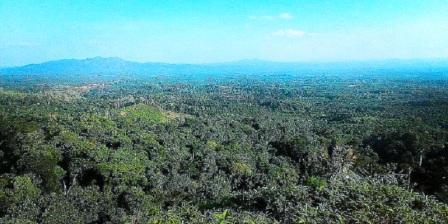 Bukit Berbunga Indragiri Hilir