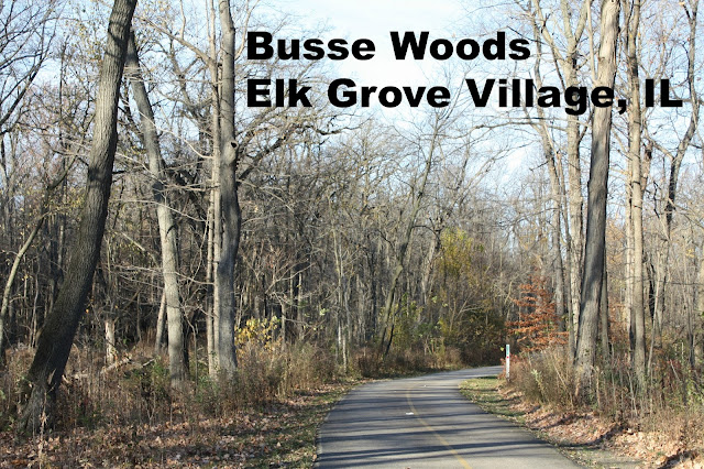 Busse Woods trails in Elk Grove Village, IL.