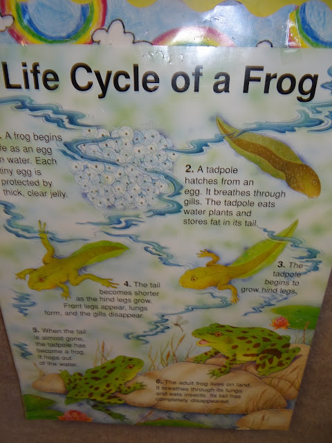 Patties Classroom A Froggy Fable And Frog Life Cycles