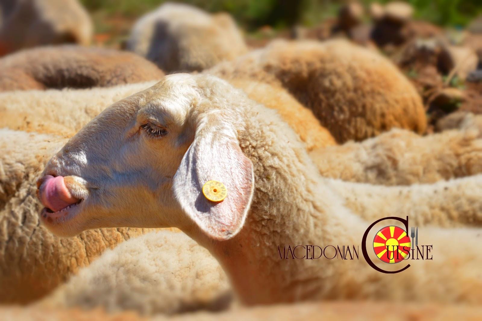 SHEEP BREEDING IN MACEDONIA ~ Macedonian Cuisine