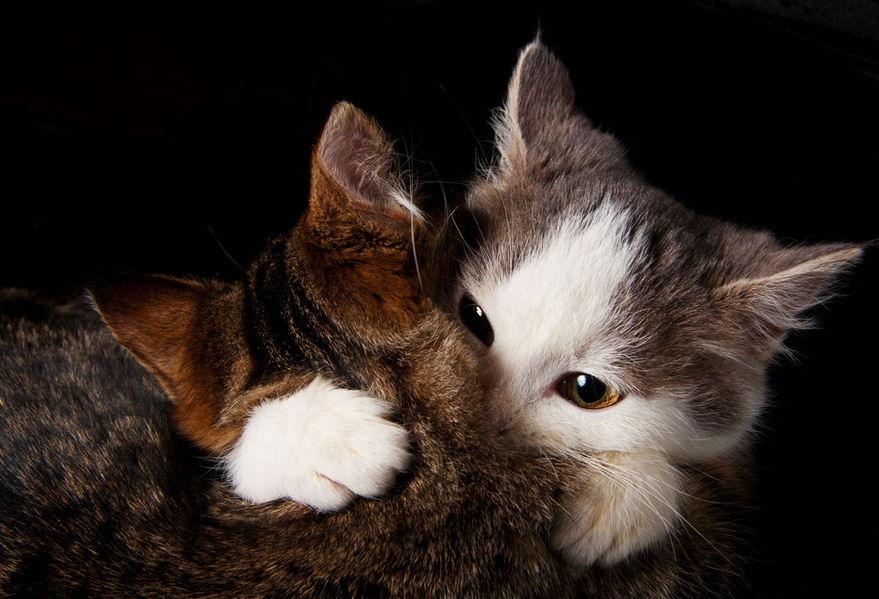 Amor De Amistad Amor De Gatos Love Cats Lovely Animals