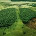 PÉLDAMUTATÓ ELHATÁROZÁS!Többé nem vágnak ki egyetlen fát sem Norvégiában! Ezért: